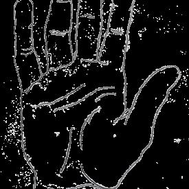 hand-illustration-web-optimized