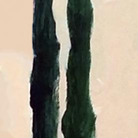 cypress-trees-illustration-web-optimized